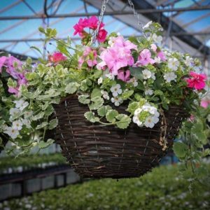 "14"" Rattan hanging basket packed with summer flowers"