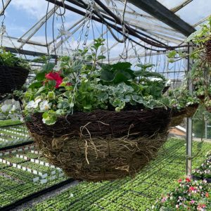 "16"" Summer Moss Hanging basket packed with flowers £25"