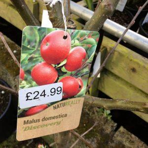 Fruit Tree Apple Malus domestica Discovery
