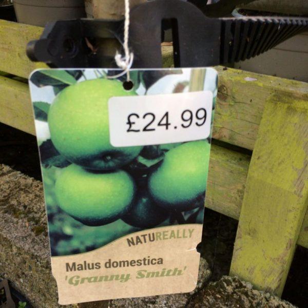 Fruit Tree Apple Malus domestica Granny Smith