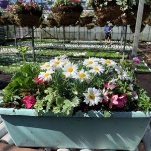 Elho Window Box 50cm Mint Planter
