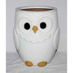 Glazed Owl