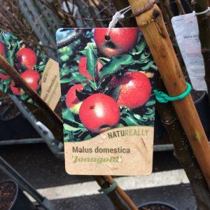 Fruit Tree Apple Malus domestica 'Jonagold'