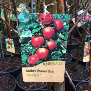 Fruit Tree Apple Malus domestica 'Katja'