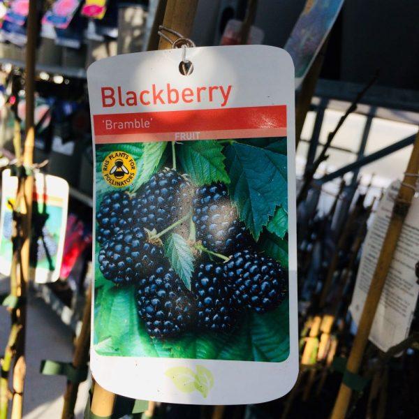 Fruit Blackberry 'Bramble'