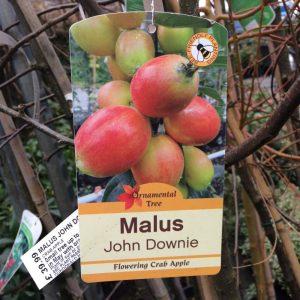Malus John Downie (Flowering Crab Apple)